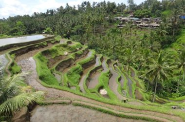 Premier voyage à Bali